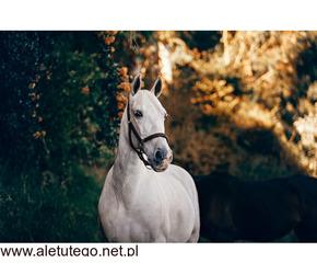 Ochraniacze chłodzące dla konia | Animalia