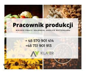 Sortowanie warzyw i owoców/Pakowanie  – Bez doświadczenia. Holandia