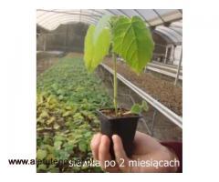 OXYTREE – wyjątkowa roślina w Twoim ogrodzie