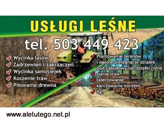 Usługi leśne Wycinka odkrzaczanie koszenie traw niwelacja pilarz - 1/1